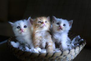 drei Katzen zum angenehmen Deutschlernen